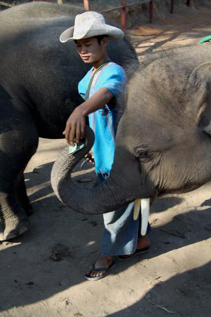 Cuidador de elefantes y el paquidermo en el Campamento de Elefantes de Chiang Mai, Tailandia. Fotografía: Lucía Cornejo. Texto: Margarita T. Pouso